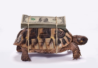 Money Tortoise