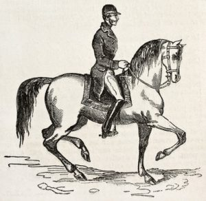 Jockey Horse Old Illustration