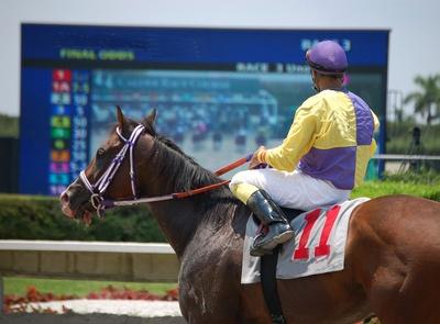 Horse Jockey Parading