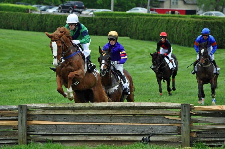 Jumps horse race