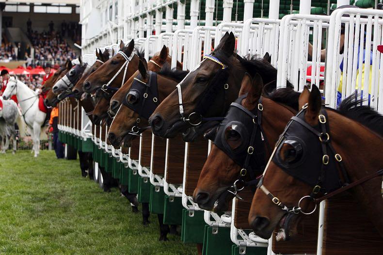 Horse start gate